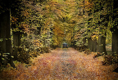 Photograph -  Forest Escape Autumn Leaves  by Henrik Petersen