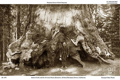 Photograph -  Galen Clark At Mariposa Grove  By George Fiske Yosemite Photographer Circa 1900 by California Views Archives Mr Pat Hathaway Archives
