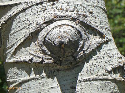 Humanlike Photograph -  Gecko Eye by Deborah Moen