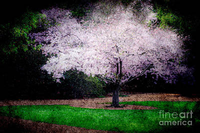 Photograph -  Ghostly Spring by Bobbi Feasel