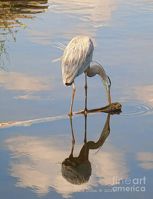 Photograph -  Great Blue Heron  by Grace Dillon