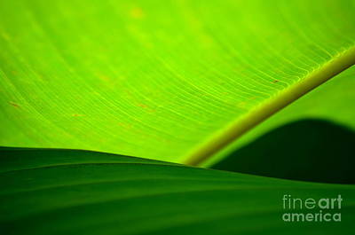 Greens Art Print by Michelle Meenawong