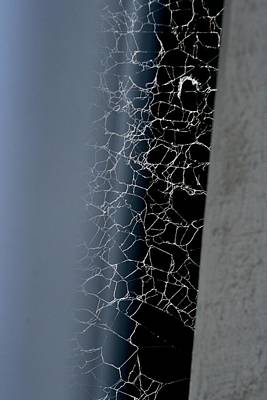 Photograph -  Grey And Spider Web by Phoenix De Vries