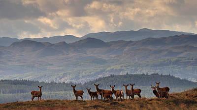 Photograph -  Highland Harem by Gavin Macrae
