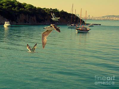 Photograph -  Istanbul Island Sea Gulls by Lou Ann Bagnall