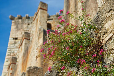 Photograph -  Italian Ruins In The Near Of The Lake Garda by Nick  Biemans