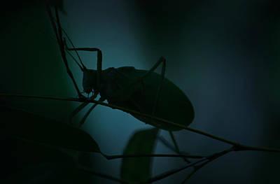 It's A Bug... Art Print by Tammy Schneider
