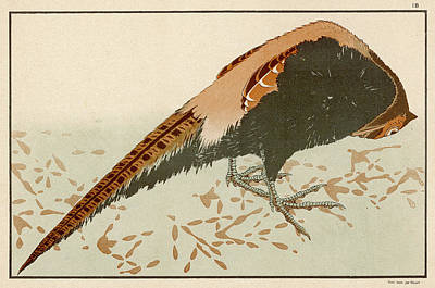 Pheasant Drawing -  Japanese Pheasant  Phasianus by Mary Evans Picture Library