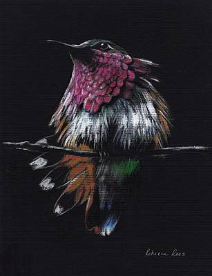 Central America Mixed Media -  Jewel   Amethyst-throated Hummingbird by Rebecca Rees