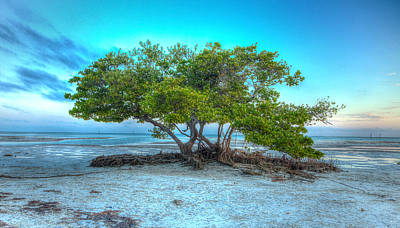 Key West Solitary Existence Art Print