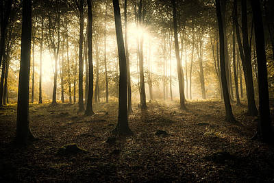 Ashford Photograph -  Kings Wood In Autumn by Ian Hufton