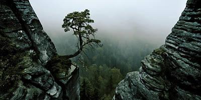 Bonsai Rock Photograph - /\\-l /\\ by Andreas Schott