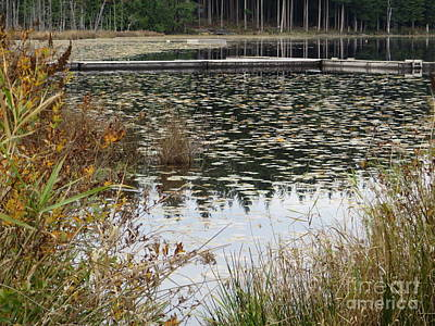 Lily Pads On Whonnock Lake Art Print