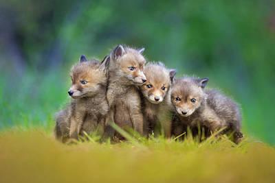 Cute Puppy Photograph - ... Little Explorers ... by Pali Gerec