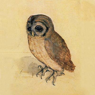 Little Owl Art Print by Albrecht Durer
