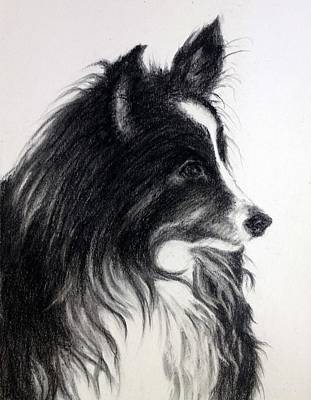 Commission Work Drawing -  Lovely Border Collie by Sun Sohovich