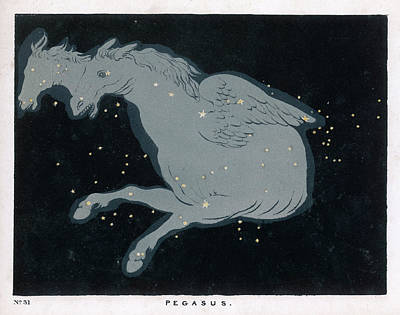 Pegasus Drawing -  Lying Near The Head Of The  Figure by Mary Evans Picture Library