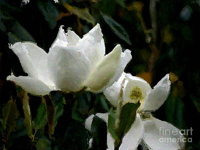 Butterflies Rights Managed Images -  Magnolia-2  Royalty-Free Image by Joel Thompson