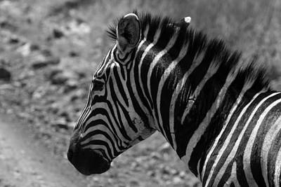 Photograph - Zebras Of The Masai Mara by Aidan Moran