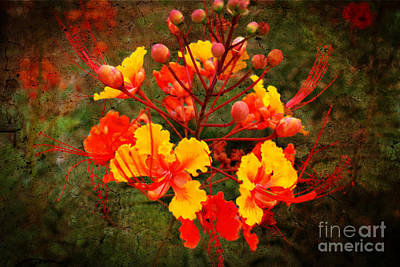 Mexican Red Bird Of Paradise Print by Beverly Guilliams