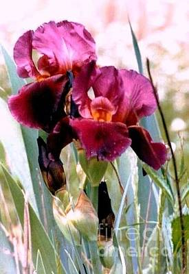 Photograph -  Mississippi Purple Iris by Michael Hoard