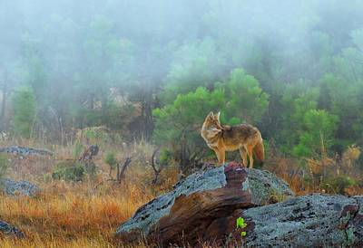 Great Outdoors Photograph - '' Morning Patrol '' by Kadek Susanto
