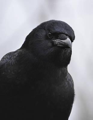 Photograph -  Mother Crow  Love by Rae Ann  M Garrett