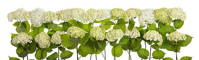 Mourning White And Green Flowers Line Isolated Art Print