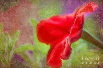 Photograph -  My Pretty Petunia by Peggy Franz
