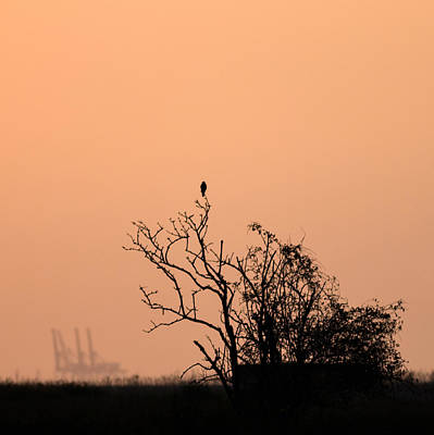 Kestrel Photograph -  Oare At Sunset by Ian Hufton
