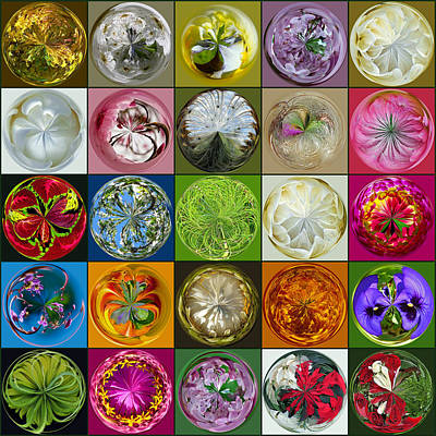Photograph -  Orb Collage by Tikvah's Hope