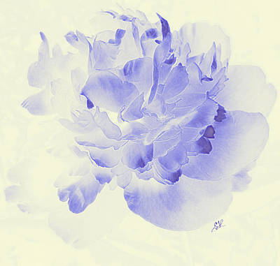 Photograph -  Paeony - Shadow In Blue by Stephanie Grant