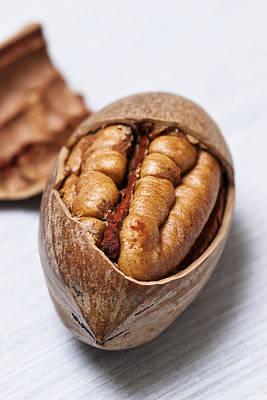 Pecan Nut Art Print