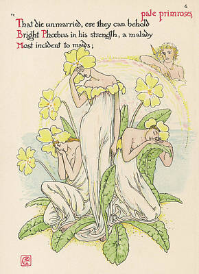 Primroses Drawing -  Primrose Personified         Date 1906 by Mary Evans Picture Library