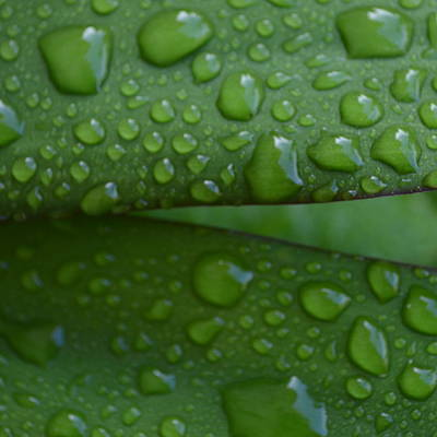 Photograph -  Raindrops On Green by Cheryl Miller