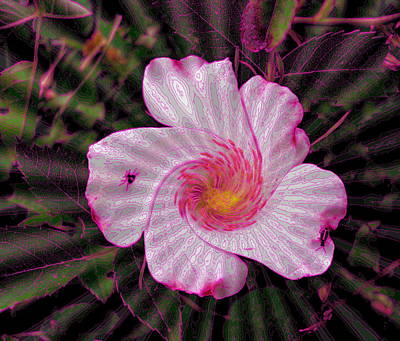 Photograph -  Rippling Pink by Yolanda Raker