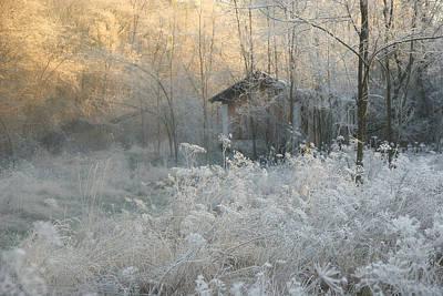 Frost Photograph - * by Sheila Bernard