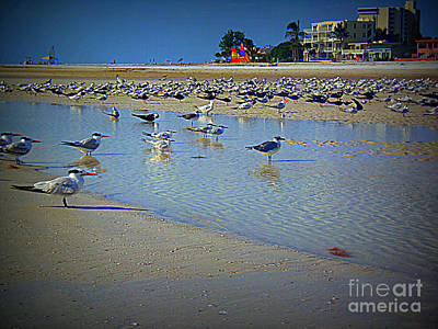 Photograph -  Siesta Beach Sea Gulls by Lou Ann Bagnall