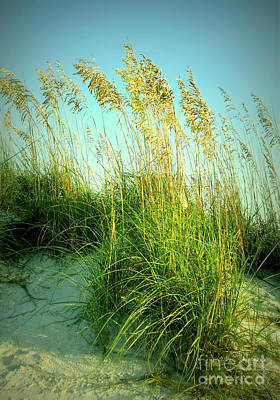 Photograph -  Siesta Key Sea Oats by Lou Ann Bagnall