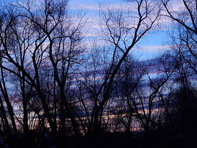 Photograph -  Silhouette Of Trees by Linda Gonzalez