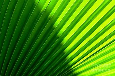 Simply Green Art Print by Michelle Meenawong