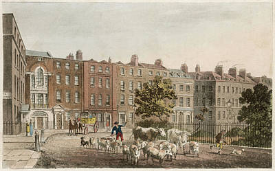Soho Square, With Cattle         Date Art Print by Mary Evans Picture Library