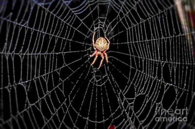 Photograph -  Spider In Web  by Peggy Franz