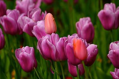 Photograph -  Springtime Treasure by My Lens and Eye   - Judy Mullan -