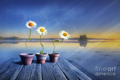 Daisies Digital Art -  Summer Morning Magic by Veikko Suikkanen