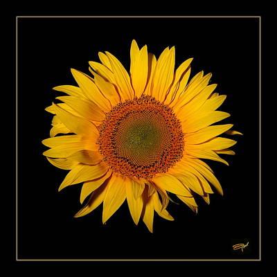 Pyrography -  Sun Flower by Emil Jianu