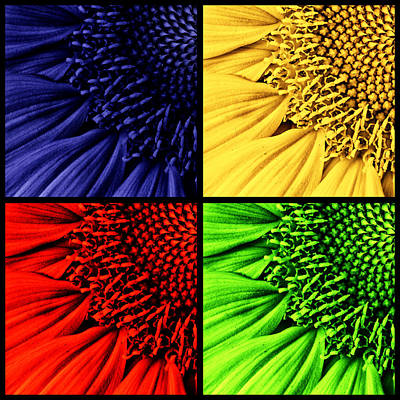 Floret Photograph -  Sunflower Medley by Mark Kiver