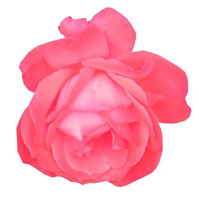 Sensul Mixed Media -  Symbolic Art Rose  Emblem Monogram Of Love Romance Sensul Sensuality Delicate Soft Touch Dream Fant by Navin Joshi