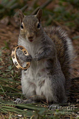 Photograph -  Tambourine Squirrel by Sandra Clark
