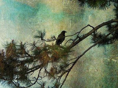 Pine Needle Digital Art -  The Old Pine Tree by Gothicrow Images